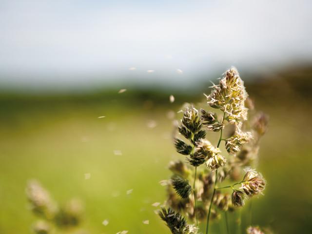 Allergien: Ein Fallbeispiel aus der Praxis | Praxis Schleicher & Brückl