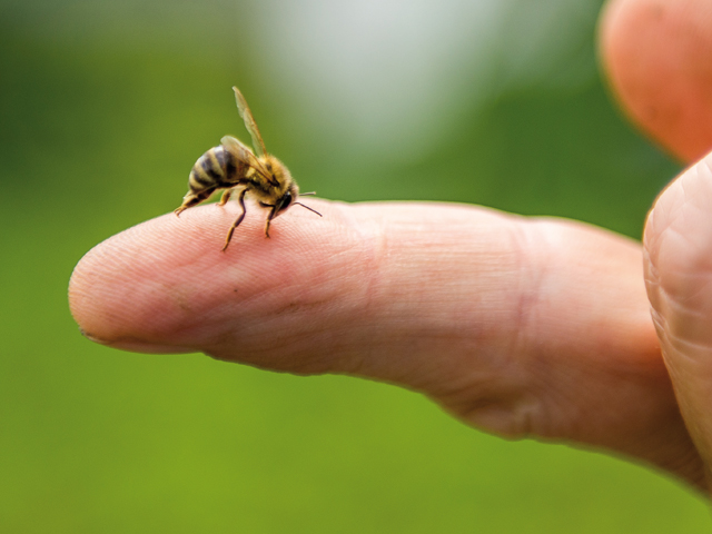 Achtung Insektenstiche: Tipps zur Vorbeugung und Behandlung | Praxis Schleicher & Brückl